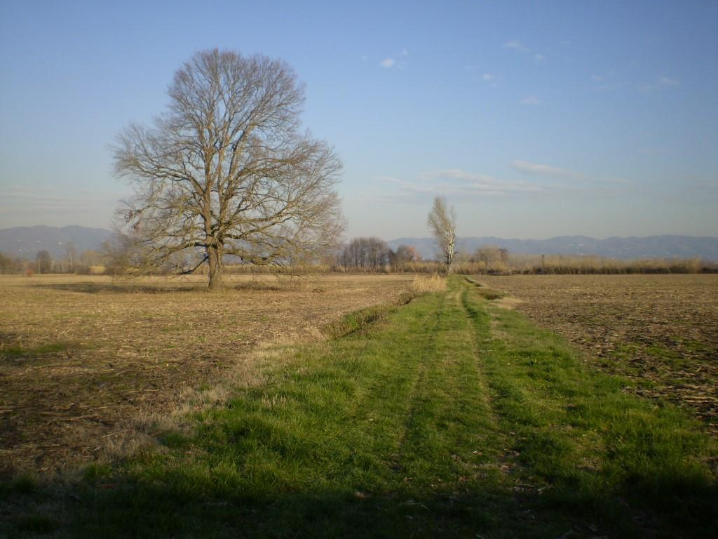 Terreni agricoli e edificabili PONTE BUGGIANESE (PT) Terreno agricolo.
